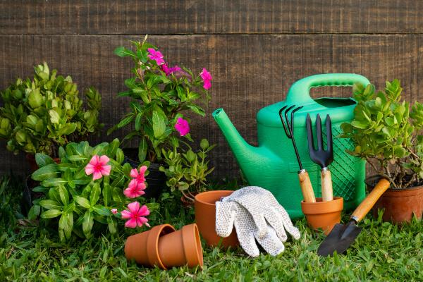 plantas, regador e apetrechos para jardim de terreno residencial
