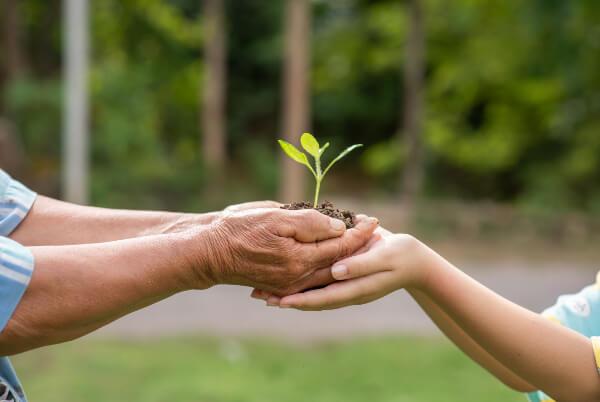 mãos segurando uma planta que vai ser cultivada em um loteamento sustentável